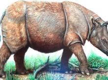 Ilustrasi badak Sumatera
